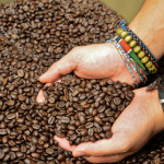 Freshly Roasted Coffee - Trees Organic