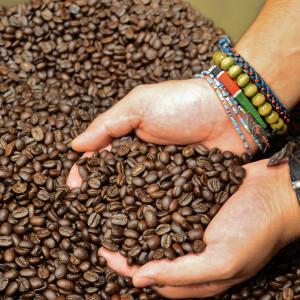 Freshly Roasted Coffee - Trees Organic