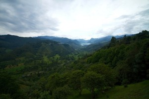 A Coffee Plantation in the Mountains