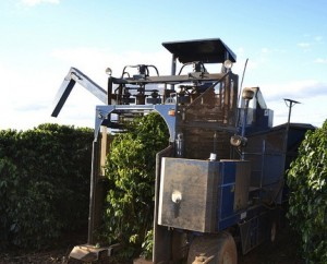 A Mechanical Coffee Harvester