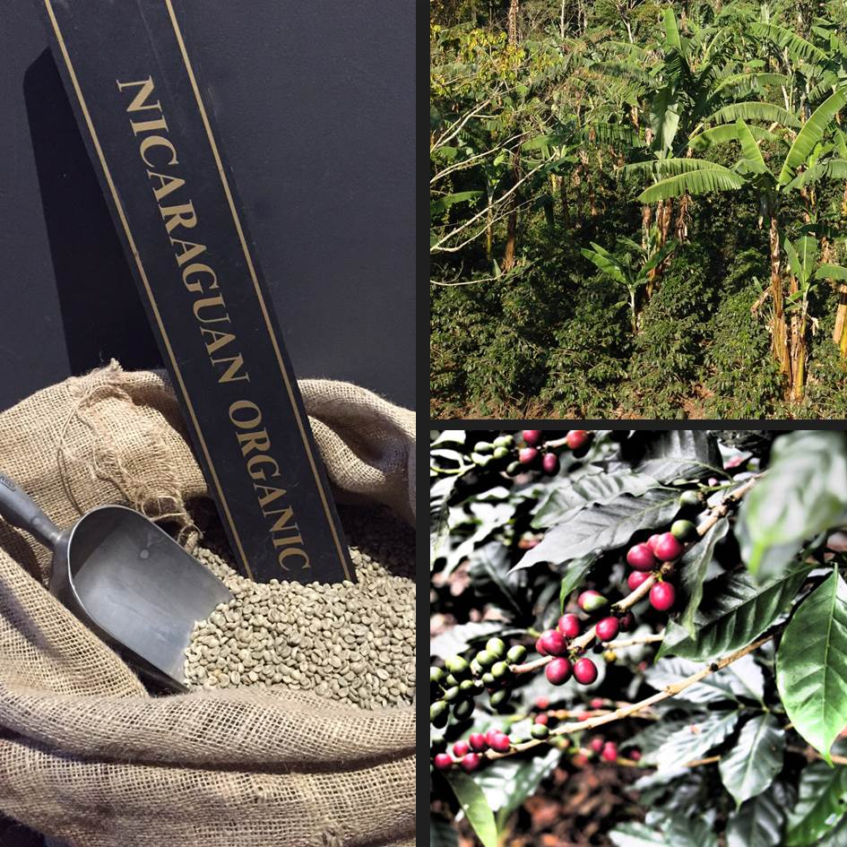 Nicaragua organic coffee from Trees Organic