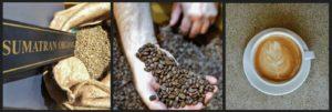 Sumatra Coffee - TreesOrganic Coffee