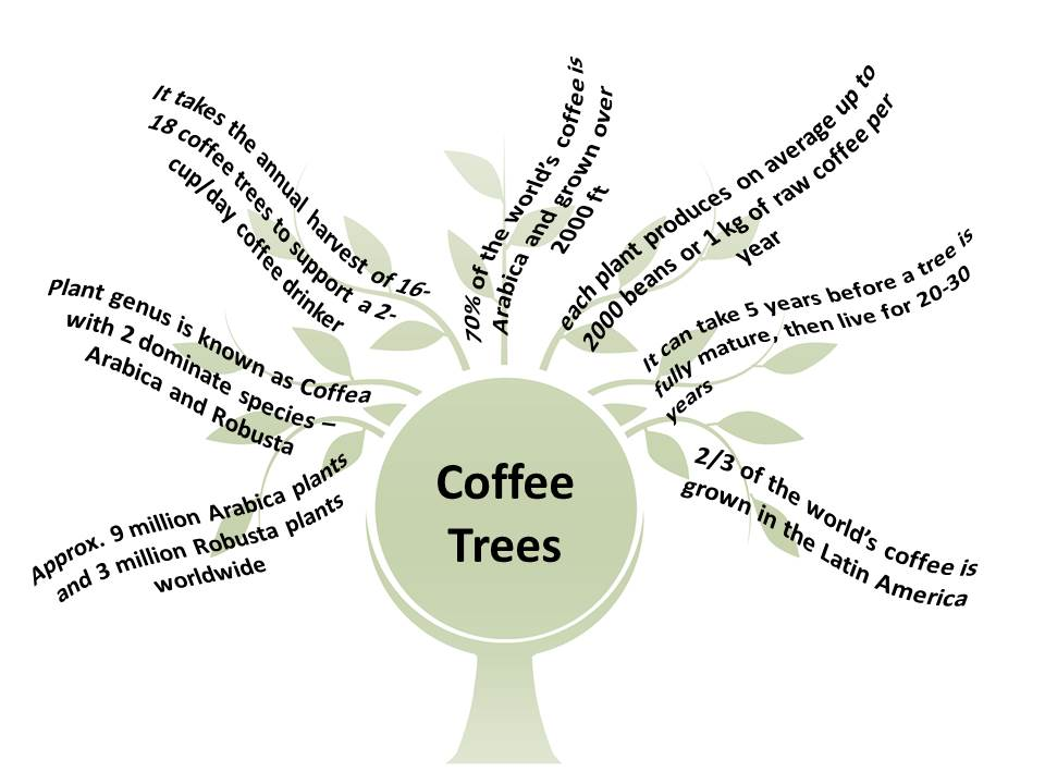 Coffee Trees Fun Facts by Trees Organic Coffee