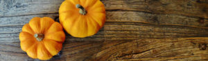 pumpkins-trees-organic-coffee-van_3786km