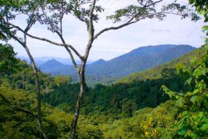 Chiapas Coffee Regon
