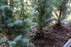 Used Coffee Grounds - Trees Organic Coffee